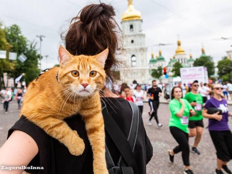 26th Chestnut Run.Kiev. Ukraine.2018